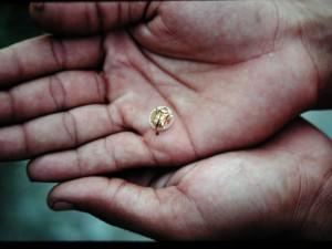 スマトラ島で見つけた金色UFO型の虫