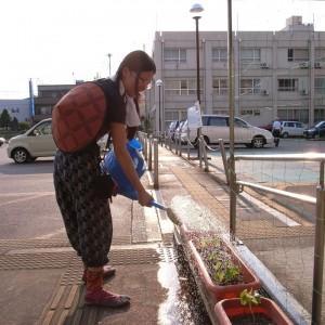 足助アサガオ、水やり中の赤塚