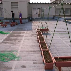 十日町病院屋上にて。植栽作業は難航