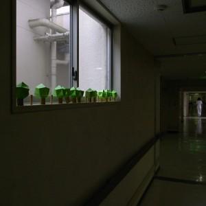 Morigamiは足助病院でも成長中。