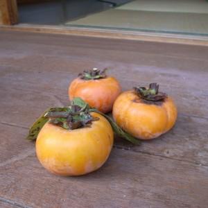 大島で実をつけた柿