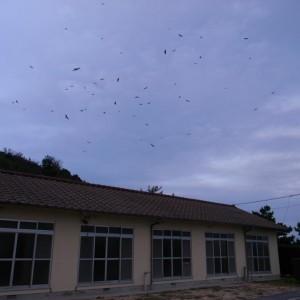 ギャラリー15寮の上を飛び回る鳶